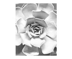 Komar Wandbild Von Succulent Closeup | Poster, Bild, Wohnzimmer, Schlafzimmer, Dekoration, Kunstdruck | ohne Rahmen | P049C-40x50 fotomural, Schwarz, Weiß, Grau