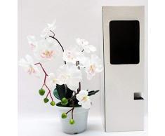 Orquídea en jarrón-caja. Vitrina