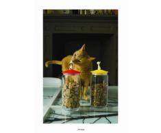 Alessi AMMI21 R - Tarro de conserva para comida para perros, tapa de resina termoplástica, color rojo