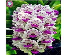 100 piezas de 20 colores rara orquídea Cymbidium, Cymbidiums semillas africanas, semillas de flor de Phalaenopsis bonsai, plantas en maceta para el jardín de 8