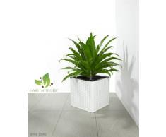 Maceteros para plantas de polyrattan marca Gartenfreude incluye insertos plásticos y sistema de riego para el interior y el exterior, blanco, 31 x 31 x 31 cm