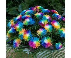 ADOLENB Seed House - Semillas de crisantemo, semillas de flores coloridas de crisantemo del arco iris, 10/20/50/100 semillas/paquete - planta ornamental para el jardín