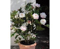 Ramo de peonías artificial con 9 flores, 6 brotes, blanco-rosa, 120 cm - Mata decorativa / Flores sintéticas - artplants