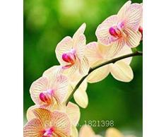 La venta caliente 50pcs rara orquídea Cymbidium, Cymbidiums semillas africanas, semillas de flores bonsai, plantas para el jardín de c