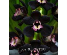 La venta caliente 50pcs rara orquídea Cymbidium, Cymbidiums semillas africanas, semillas de flores bonsai, plantas para el jardín de 9