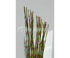 Artificial para la orquídea Cymbidium y bambú florero de flores pantalla