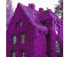 KINGDUO 100Pcs Perfume Arco Iris Plantas De Escalada Coulourful Roca Cress Flor Semillas-Púrpura