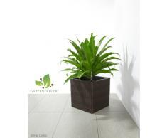 Maceteros para plantas de polyrattan marca Gartenfreude incluye insertos plásticos y sistema de riego para el interior y el exterior, marrón bicolor, 31 x 31 x 31 cm