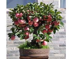 FastDirect Semillas de Manzana Semillas Frutales 10 PCS Semillas de Arboles Bonsai de Manzano para Balcón Interior, Jardin, Huerto