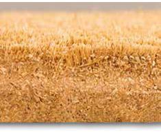 Faba Home de fibra de coco Felpudo de fibra de coco de terciopelo la suciedad de la pesca, muy resistente, el tiempo de sólida de Felpudo, un tapete 75 x 45 x 2 cm, Tulpe im Blumentopf