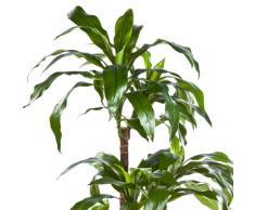 Dracaena Fragrans artificial, en maceta, 80 hojas, verde, 120 cm - Árbol sintético / Palmera decorativa - artplants