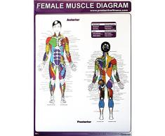 Universal productiva Fitness Póster Serie hembra muscular diagramas (cinta)