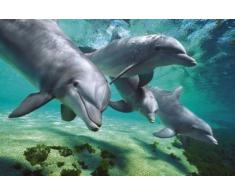 GB eye LTD, Dolphins, Underwater, Maxi Poster, 61 x 91,5 cm