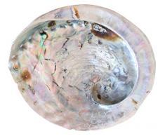 Concha Abalón/Madre Perla (17cm) Jabonera de Baño Plato Decorativo Concha