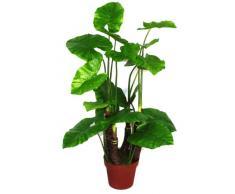 Planta de Taro Artificial Geko 1 pieza extra grande 105 cm