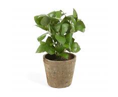 Planta albahaca artificial Zelena