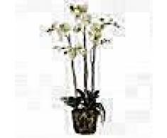 Emerald Orquídea artificial con musgo verde claro 419148